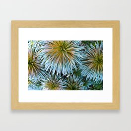 Star Plant Teal Framed Art Print