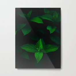 Green Mint Leaves With A Black Background Metal Print