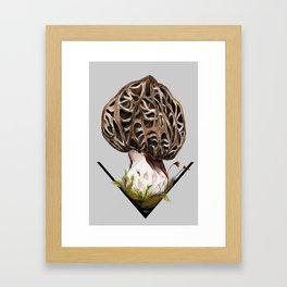 Morchella esculenta - the common morel Framed Art Print