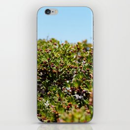 Coastal iPhone Skin