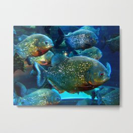 These are not gold fish Metal Print