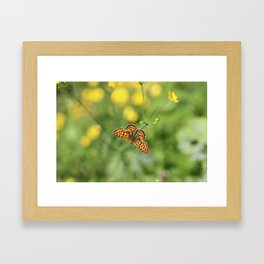 Small pearl-bordered fritillary and buttercups Framed Art Print