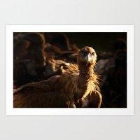 Vulture #2 Art Print