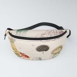 Adolphe Millot - Mollusques 02 - French vintage zoology illustration Fanny Pack