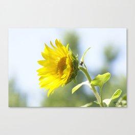 Ladybug and it's Sunflower Canvas Print