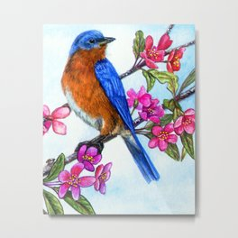 Bluebird and Apple Blossoms Metal Print