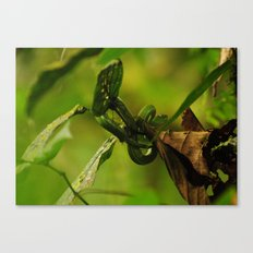 Green Snake in the Trees Canvas Print