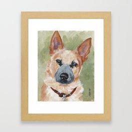 Australian Cattle Dog Framed Art Print