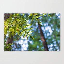 Evergreen Dreams Canvas Print