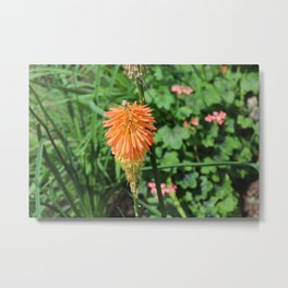 Flowers at The Sky Garden, London, 20 Fenchurch Street Metal Print