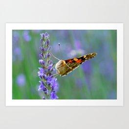 Butterfy 57 Art Print