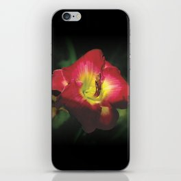 Glorious red daylily Joan Derifield iPhone Skin