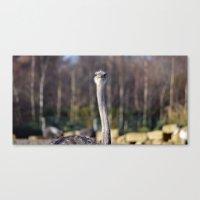 ostrich Canvas Prints featuring Ostrich by JBuck