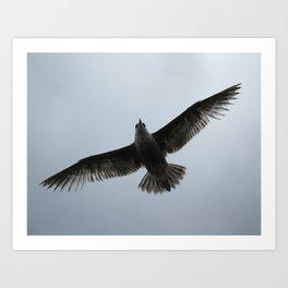 Gotta fly now Art Print