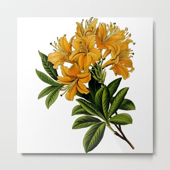 Herbal Flowers Metal Print
