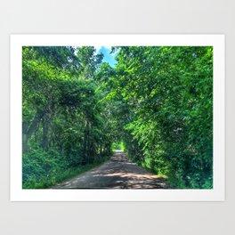 Tree Tunnel  Art Print