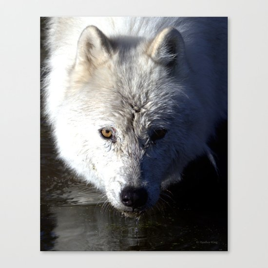 Quenched Canvas Print