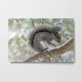 Gray Squirrel Curling Its Tail in a Snowstorm Metal Print