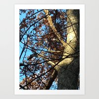 Pileated Woodpecker Amidst the Trees Art Print