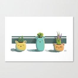 Suculentas Canvas Print
