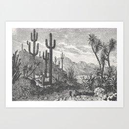 Cactus in Mountain Art Print