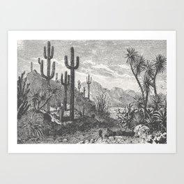 Cactus in Mountain Art Print