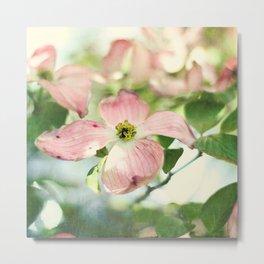 pink dogwood Metal Print