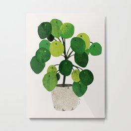 Pilea Peperomioides interior plant Metal Print