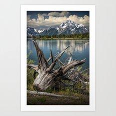 Tree Stump on the Northern Shore of Jackson Lake at Grand Teton National Park Art Print