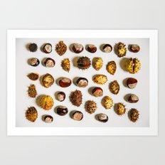 Chestnut Collection Photograph Art Print