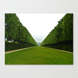 Between The Hedges Canvas Print