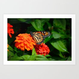 Monarch and the Mum by Teresa Thompson Art Print