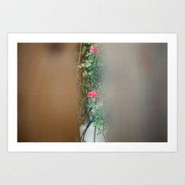 The Last Rose. Art Print
