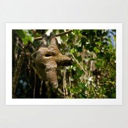 Brown-throated Three-toed Sloth Art Print
