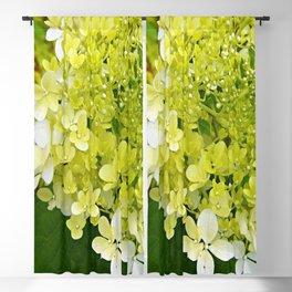 Elegant Chartreuse Green Limelight Hydrangea Macro Blackout Curtain