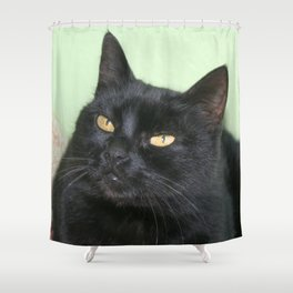Relaxed Black Cat Portrait  Shower Curtain