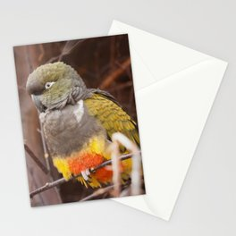 Patagonian Conure Stationery Cards