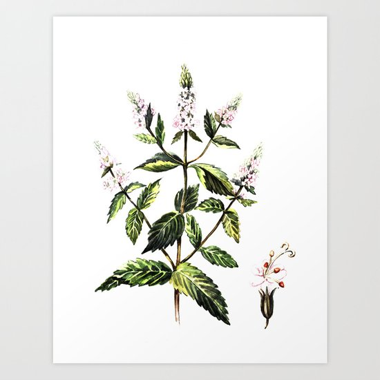 watercolor peppermint Art Print