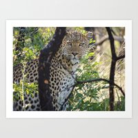 Leopard in Africa Art Print