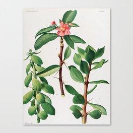 Britton & Rose Vol 1 Canvas Print
