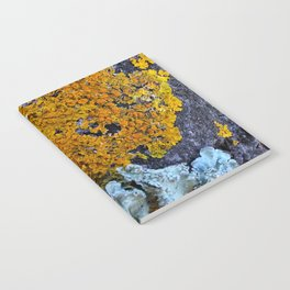 Tree Bark Pattern # 6 with Orange and Blue Lichen Notebook
