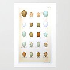 Vintage Bird Eggs  Art Print