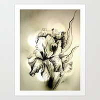 iris Art Prints featuring Iris by Suzanne Kurilla