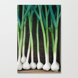 Fresh Garlic Canvas Print