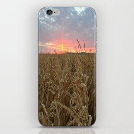 Corn Maze Sunset iPhone Skin