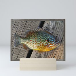 Fish On Wood Mini Art Print