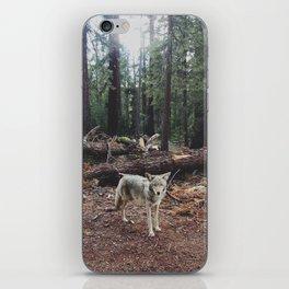 Injured Coyote iPhone Skin