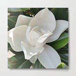 Magnolia 3 Metal Print
