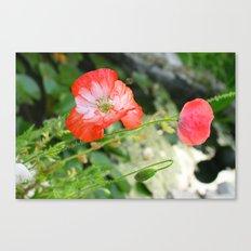 Sping Poppys Canvas Print