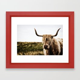 Highland Cow - color Framed Art Print